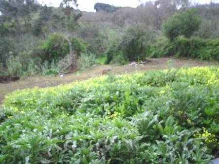 Chalet Pareado en Agua Garcia, Tacoronte - Ref. SC3CHP1669
